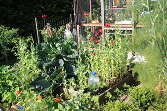 Carr potager jardinerie for Carre potager etage