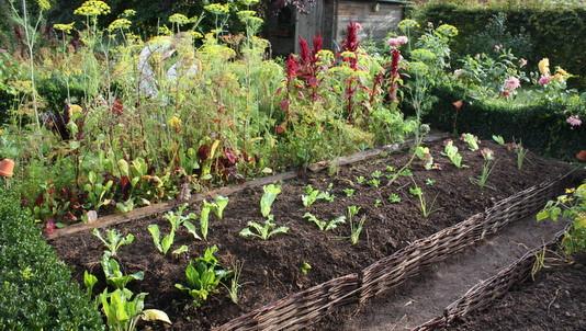 les plantations et semis spontan s en permaculture. Black Bedroom Furniture Sets. Home Design Ideas